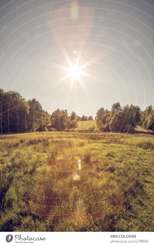 Sky Nature Summer Sun Animal Forest Landscape Yellow Environment Meadow Bright Horizon Brown Field Weather Gold