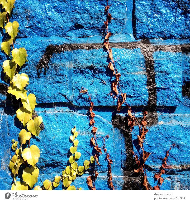 Blue Green City Plant Environment Graffiti Wall (building) Wall (barrier) Limp Ivy Wall plant Creeper