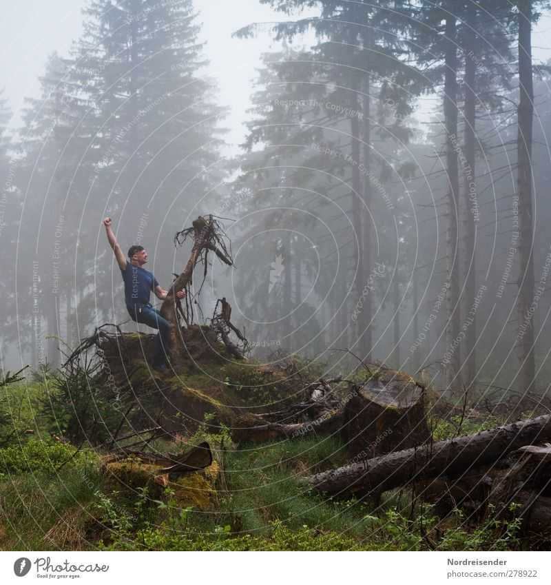 backlight fog Athletic Fitness Sports Equestrian sports Time machine Human being Man Adults Sculpture Nature Bad weather Fog Rain Forest Wood Hunting Dark