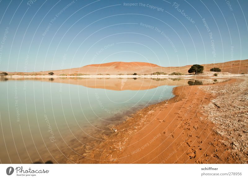 Nature Blue Tree Red Loneliness Landscape Far-off places Environment Life Sand Lake Desert Lakeside Beach dune Dune Cloudless sky
