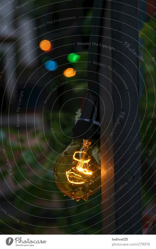 Glowworms in the bulb Lifestyle Elegant Adventure Freedom Summer Summer vacation Entertainment Event Eating Feasts & Celebrations Birthday Drops of water Grass