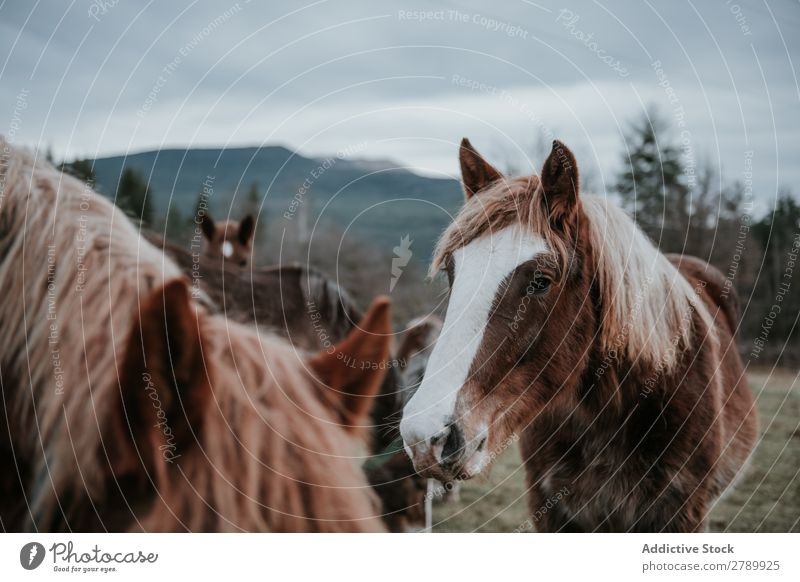 Funny horses on meadow Horse Meadow pasturing Pyrenees Field Tree Hill Clouds Sky Mountain Beautiful Mammal Animal equine Mane mare Breed Pony Domestic Head