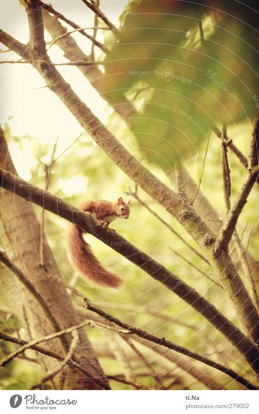 Nature Green Beautiful Summer Red Animal Yellow Small Baby animal Garden Park Gold Wild animal Wait Observe