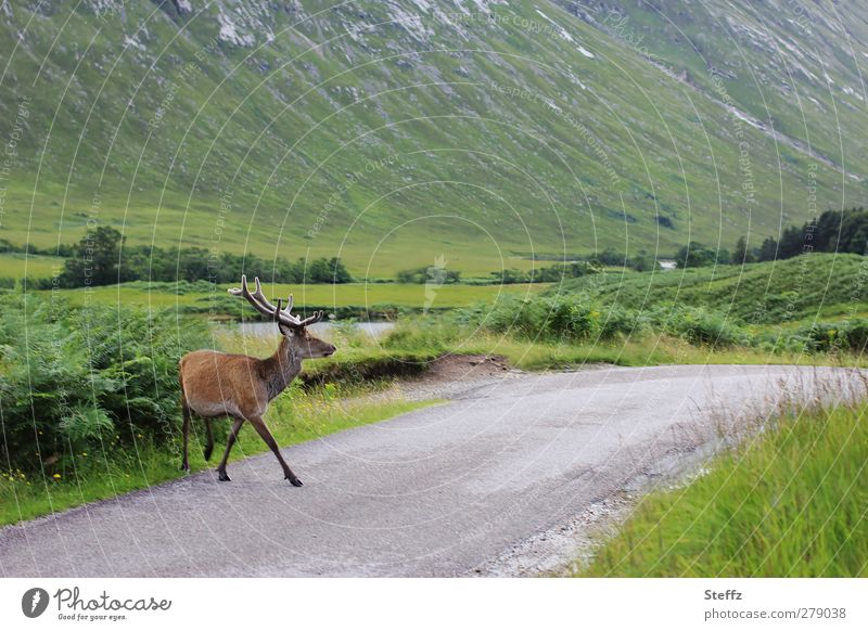 Nature Summer Landscape Calm Animal Freedom Going Wild Idyll Wild animal Transport Serene Trust Pedestrian Scotland