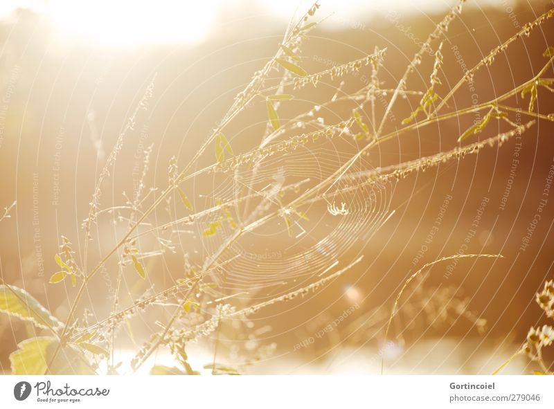 Nature Summer Plant Sun Yellow Lake Bright Gold Natural Beautiful weather Lakeside Spider Spider's web