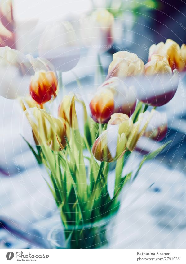 Flowers Bouquet Tulips Double Exposure Art Nature Plant Spring Summer Autumn Winter Leaf Blossoming Illuminate Blue Yellow Green Violet Orange Pink Red