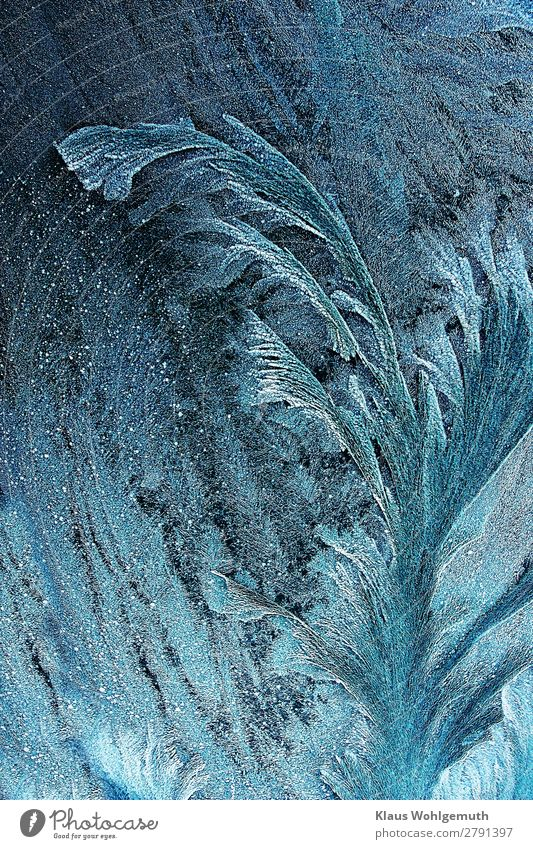 cold beauty Nature Winter Ice Frost Plant Crystal Freeze Glittering Blue Turquoise White Beautiful Cold Frostwork Frozen Colour photo Subdued colour