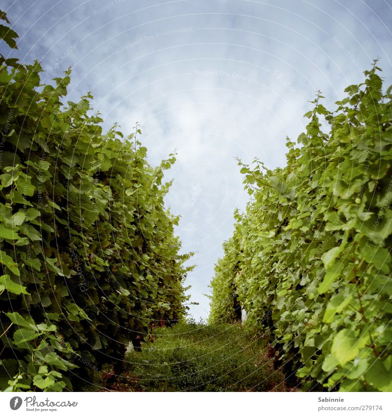 Sky Nature Blue Green Summer Plant Sun Leaf Clouds Landscape Environment Lanes & trails Field Earth Climate Arrangement