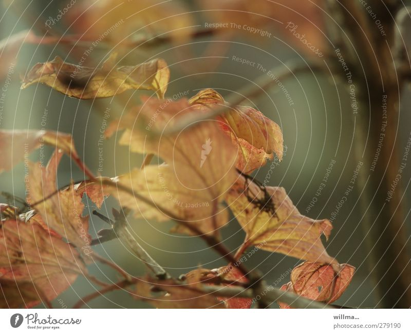 Nature Plant Tree Leaf Autumn Transience Autumn leaves Smooth Limp Faded Twigs and branches To dry up