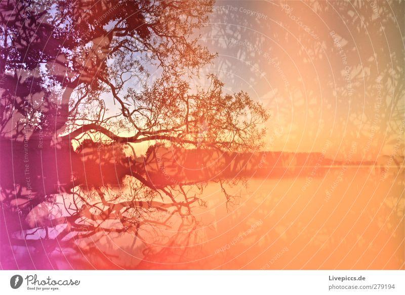 Sky Nature Water Summer Plant Tree Beach Landscape Environment Lake Art Orange Illuminate Beautiful weather Lakeside Violet