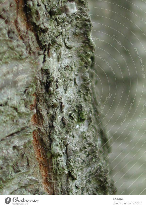 Tree Mountain Tree bark Volcano Volcanic crater