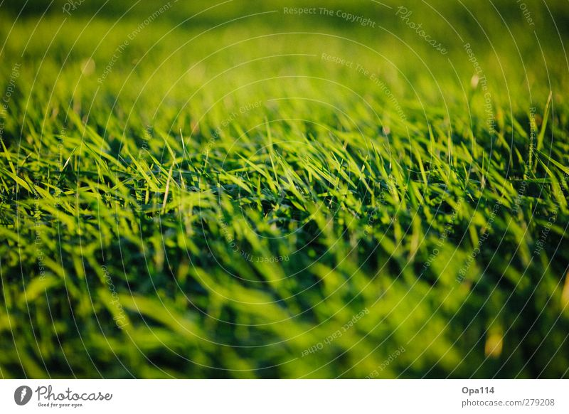 green fields Environment Nature Landscape Plant Animal Summer Weather Beautiful weather Grass Foliage plant Garden Park Meadow Field Relaxation Infinity Yellow