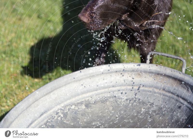 chien d'eau Summer Sun Swimming & Bathing Animal Pet Dog Water Dive Colour photo Exterior shot Day Animal portrait