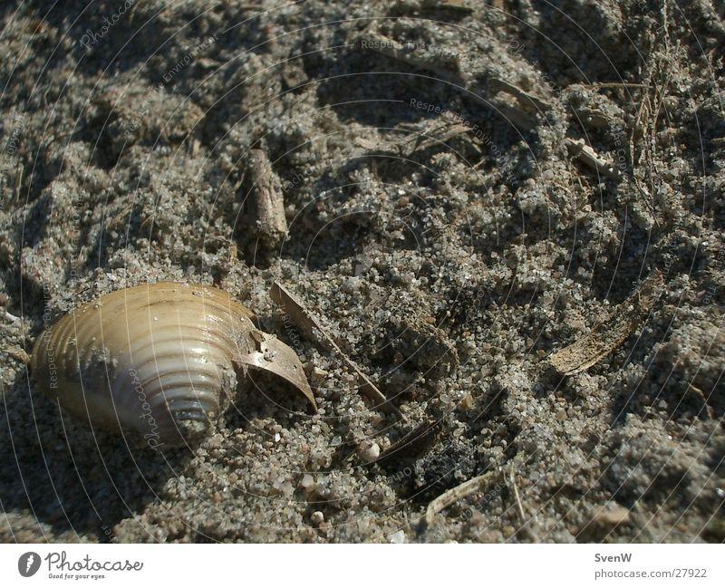 Mussel on the beach Beach Sand