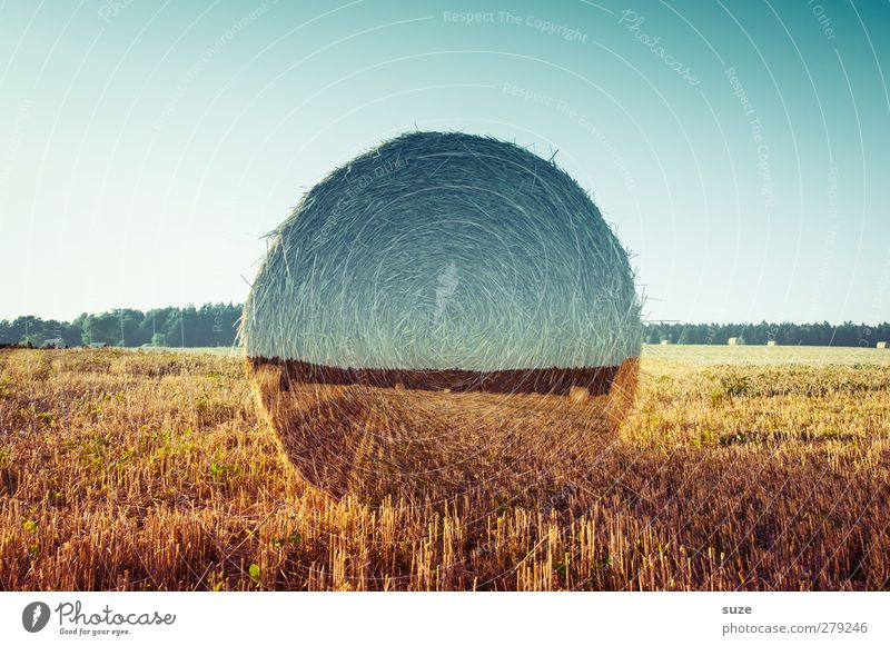 field trial Grain Summer Environment Nature Landscape Sky Horizon Climate Climate change Beautiful weather Warmth Field Growth Sustainability Round Blue Yellow