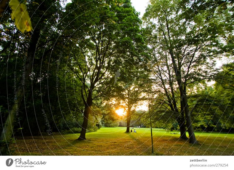 Human being Nature Summer Tree Relaxation Landscape Joy Forest Environment Love Meadow Berlin Group Moody Together Park