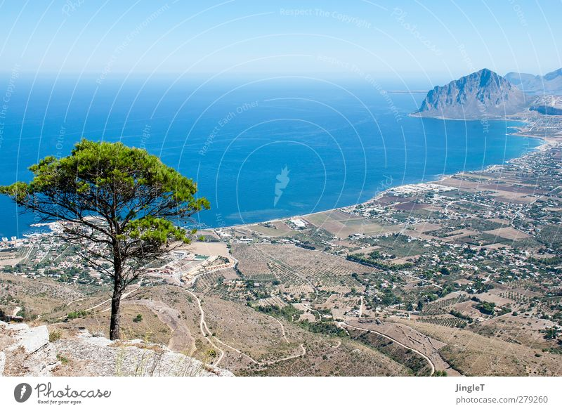 timber line Environment Nature Landscape Plant Animal Earth Water Tree Foliage plant Hill Rock Mountain Ocean Mediterranean sea Relaxation Looking Tall Blue