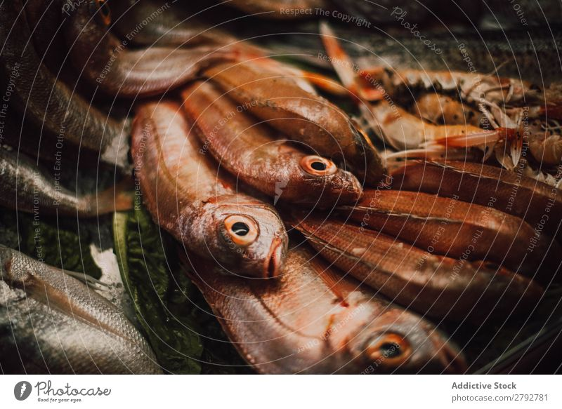 Different fresh fishes on market stall Fish Set Markets Stall Chechaouen Morocco Collection Fresh Window Food Meal Seafood Gourmet Healthy Ingredients Ocean
