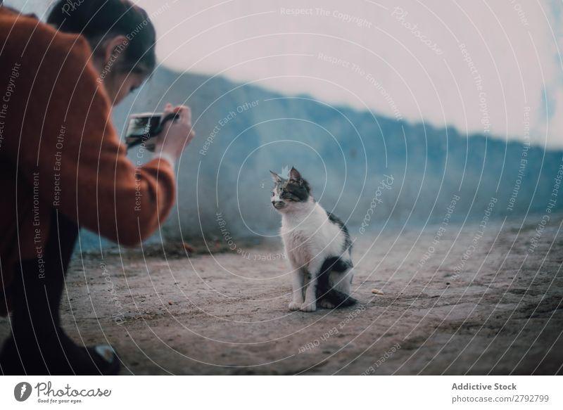 Woman taking shot of homeless cat Cat Homeless Street Photographer Camera Professional Animal