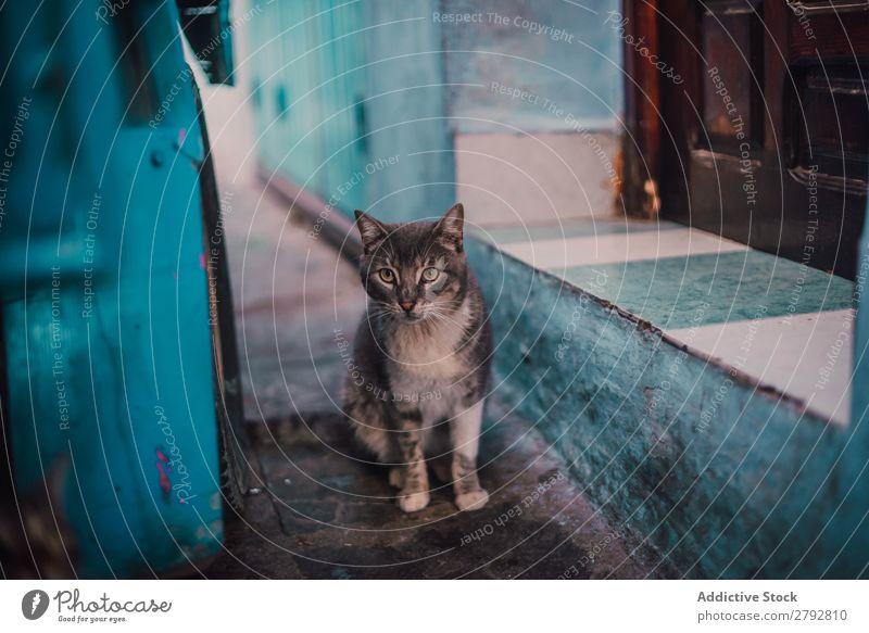 Cat looking at camera on street Street Animal Stray Pet Fur coat Kitten