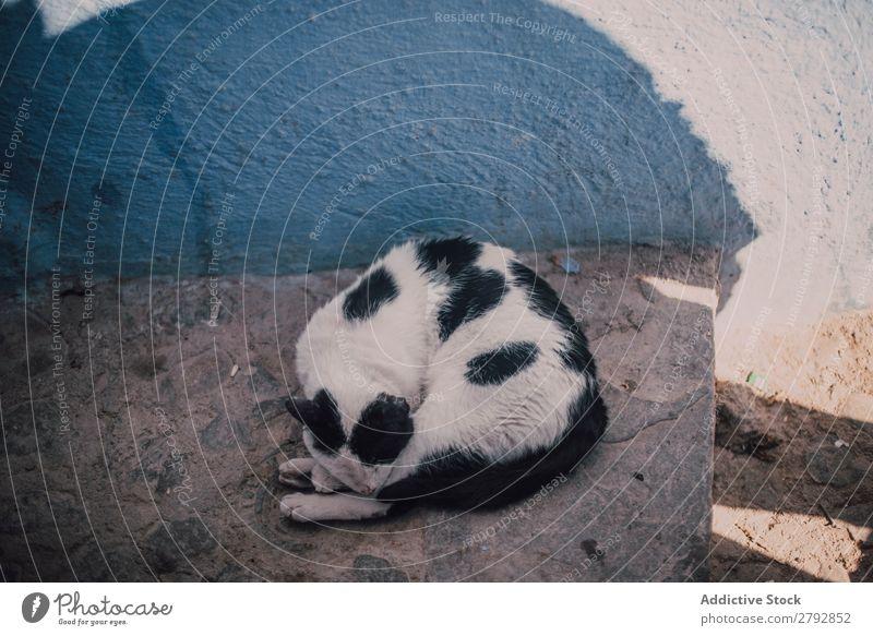 Abandoned dirty cat on road Cat Homeless Street Animal Stray Pet Fur coat