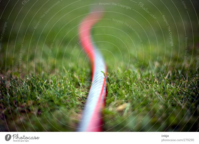 Green Summer Red Meadow Grass Garden Lie Near Long Gardening Wiggly line Garden hose Irrigation