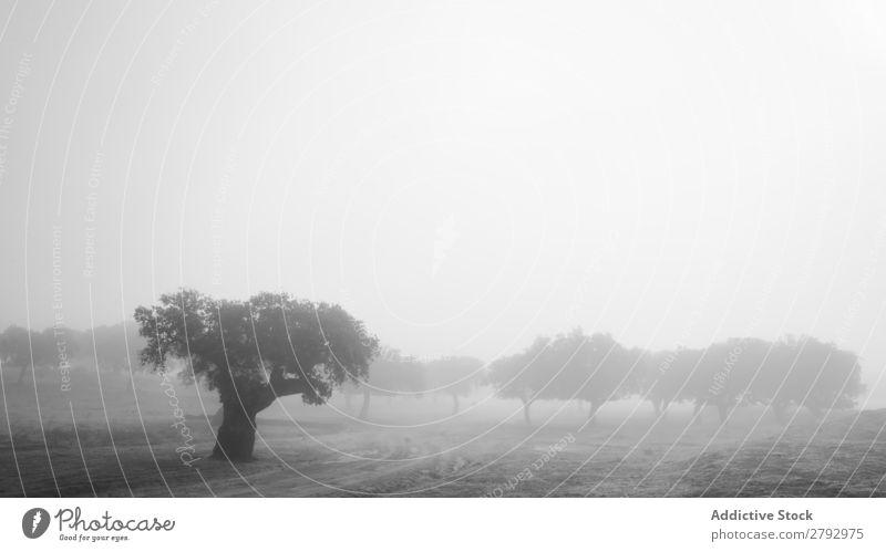 Trees on field between grass in fog Field Grass Fog Wood Meadow Sky