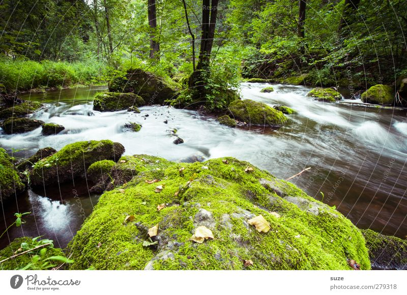 Nature Water Green Plant Landscape Environment Stone Rock Natural Growth Wet Fresh Elements Idyll River River bank