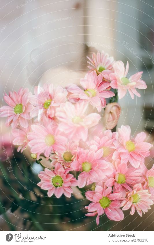 Face of young man with pink flowers Man Flower Bouquet Guy Fresh Youth (Young adults) Brunette Rose Pink Surprise Chrysanthemum through window bunch Gift