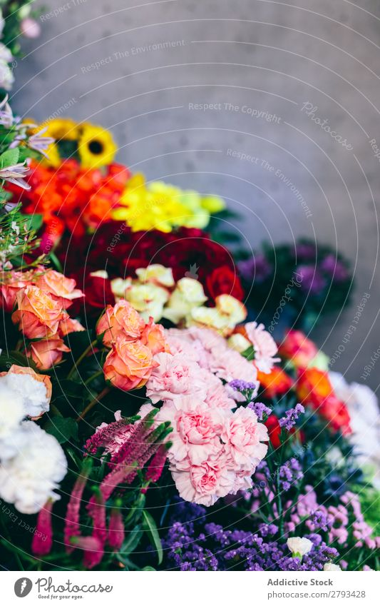 Bunch of flowers in the flower shop. Flower Floral Shopping Markets Florist Plant Green Decoration Storage Garden Nature Sale Business Blossom Fresh Natural