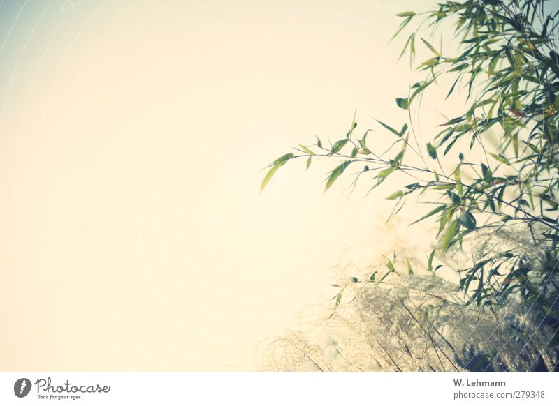 Nature Plant Sun Landscape Environment Grass Spring Weather Seasons Fatigue Cloudless sky Bamboo