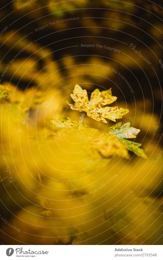 Background of autumnal leaves Autumn Leaf Background picture Yellow Nature Colour Seasons Pattern Multicoloured Holiday season Consistency Close-up