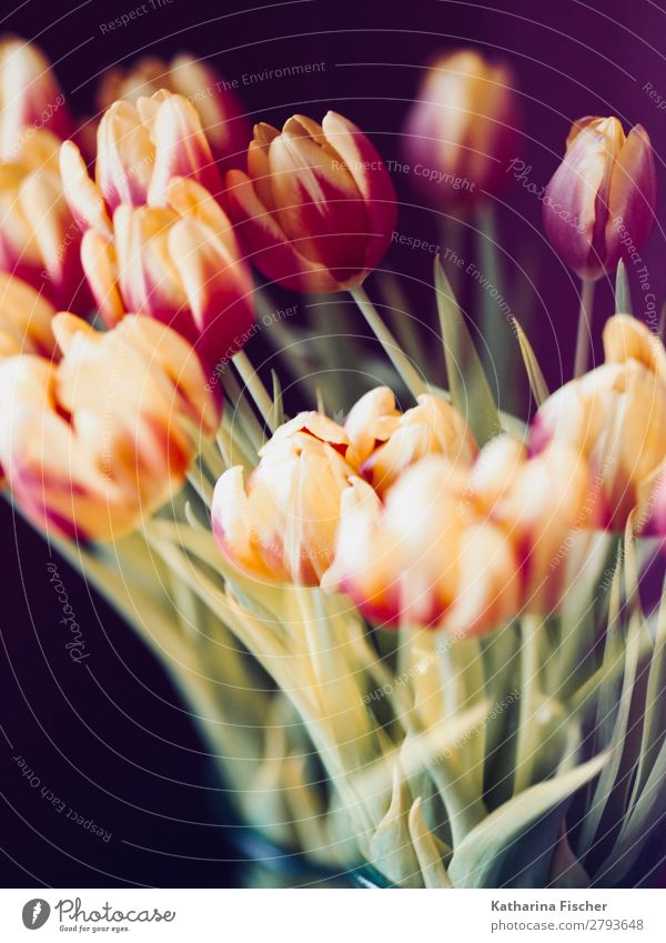 Spring Tulips Bouquet yellow red orange Nature Plant Summer Autumn Flower Leaf Blossom Blossoming Illuminate Fragrance Beautiful Multicoloured Yellow Green