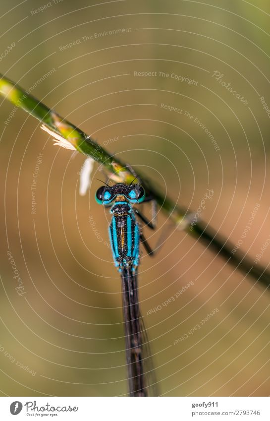 blue dragonfly Trip Adventure Expedition Nature Spring Summer Grass Bushes Foliage plant Garden Park Meadow Virgin forest Animal Wild animal Animal face Wing 1