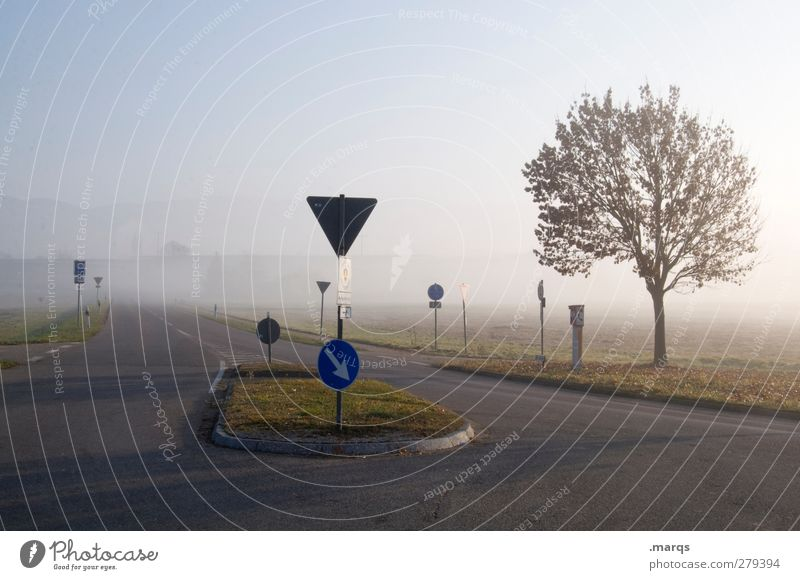 Nature Tree Landscape Environment Street Autumn Lanes & trails Moody Weather Climate Fog Signs and labeling Transport Fresh Safety Arrow
