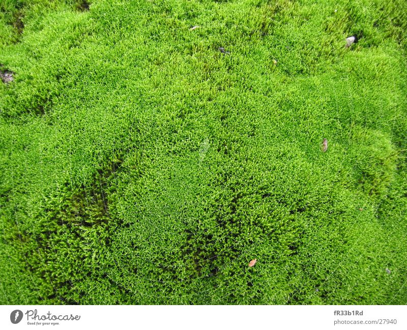 Green Plant Forest Soft Moss