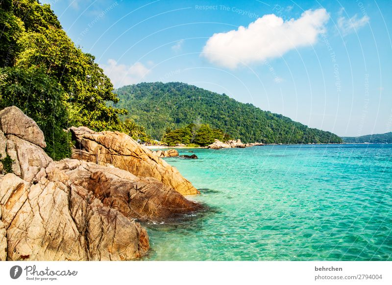 Sky Vacation & Travel Nature Landscape Tree Ocean Relaxation Clouds Leaf Far-off places Beach Mountain Coast Tourism Exceptional Freedom