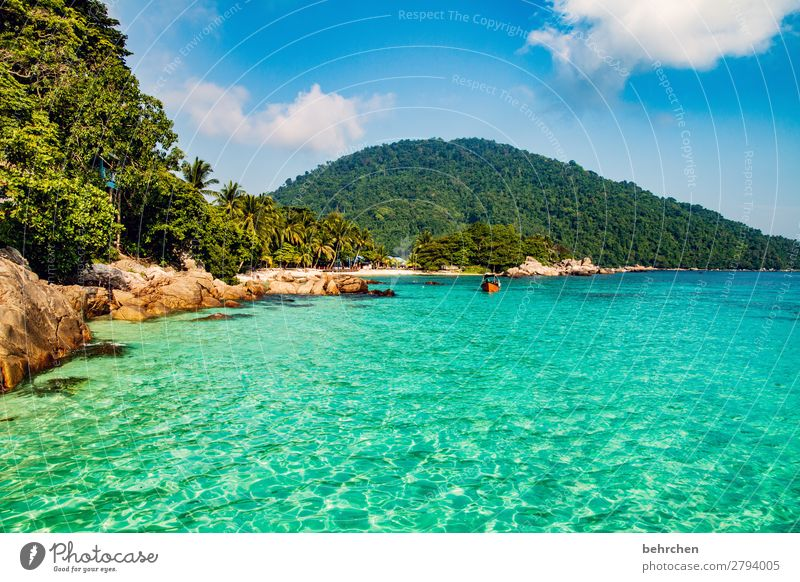 little dreams Rock Relaxation relax recover Romance Palm tree Malaya Landscape Asia Island Virgin forest Paradise Dream island perhentian besar palms Water