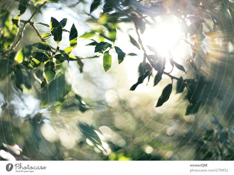 Pure Light. Art Esthetic Contentment Visual spectacle Light (Natural Phenomenon) Flare Refraction Point of light Shaft of light Beam of light Sun Virgin forest