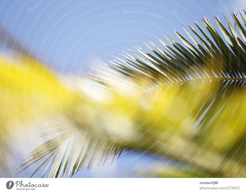 Palm fronds. Art Esthetic Palm tree Palm beach Palm House Palm roof Vacation & Travel Vacation photo Summer vacation Vacation destination Vacation mood