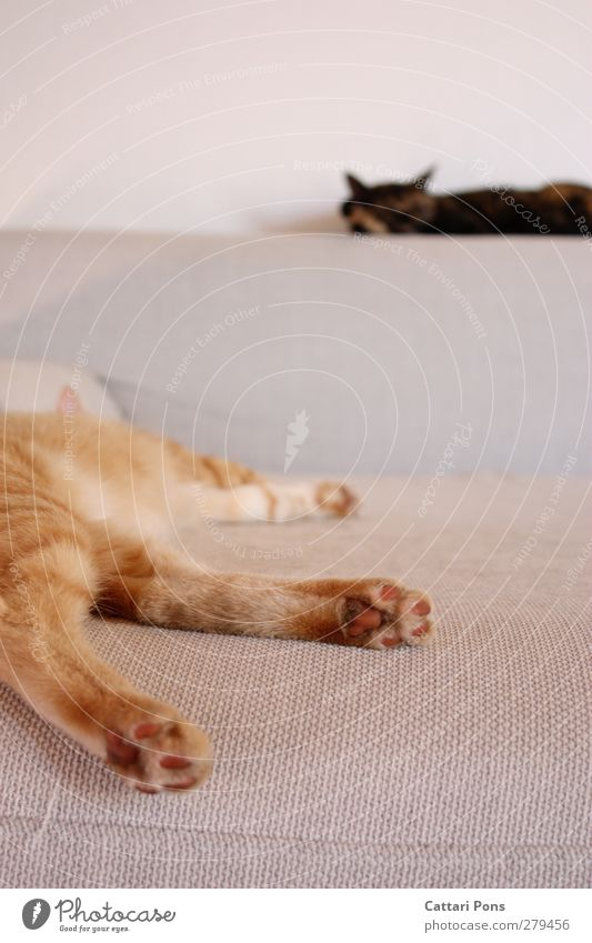 Cat Animal Calm Relaxation Dream Together Room Lie Flat (apartment) Natural Sleep Cute Soft Simple Pelt To enjoy