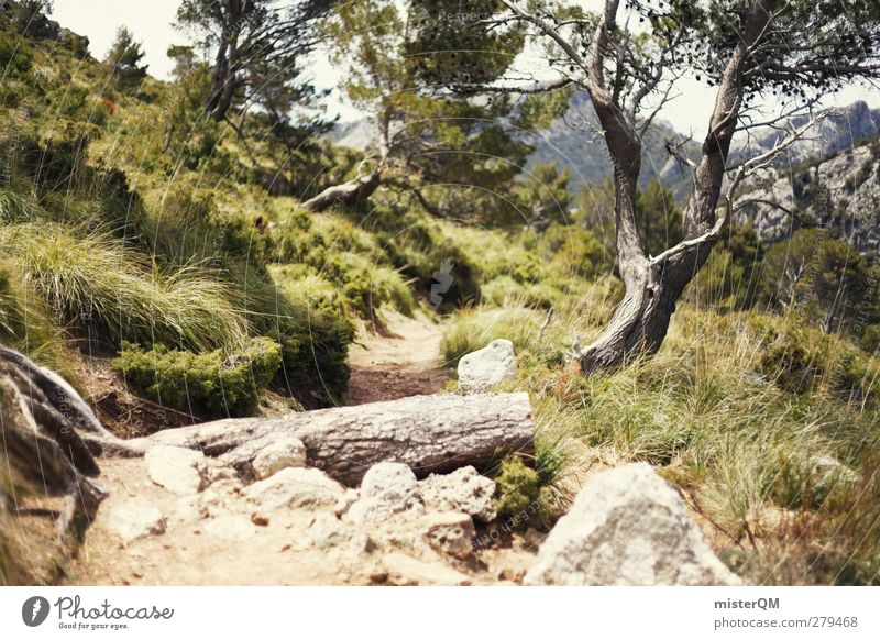 somewhere magic. Environment Nature Landscape Plant Earth Esthetic Tree Lanes & trails Footpath Hiking Forest High plain Stony Freedom Exterior shot Majorca