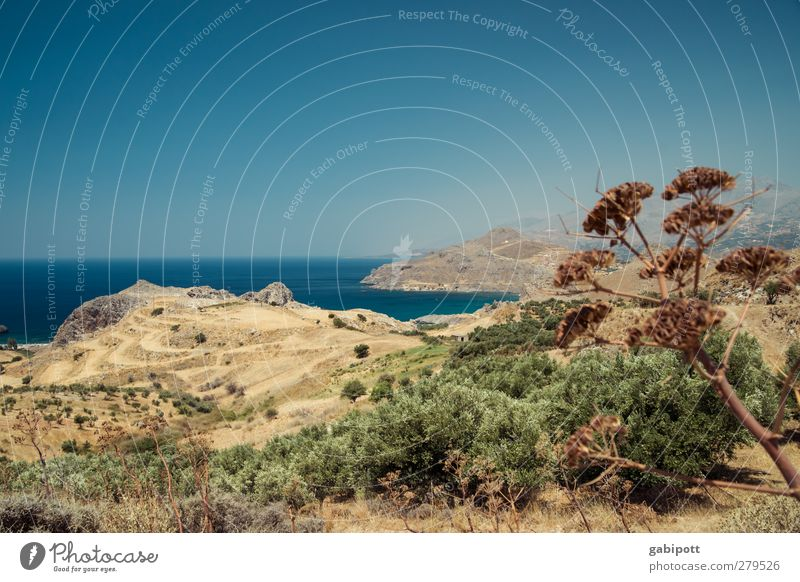 yearning for the sea Nature Landscape Plant Elements Earth Water Cloudless sky Horizon Summer Beautiful weather Bushes Hill Coast Bay Ocean Crete Gloomy Dry