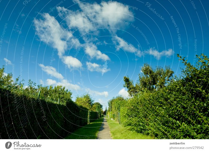 Sky Nature Beautiful Summer Plant Tree Clouds Landscape Environment Lanes & trails Garden Park Weather Climate Beginning Perspective