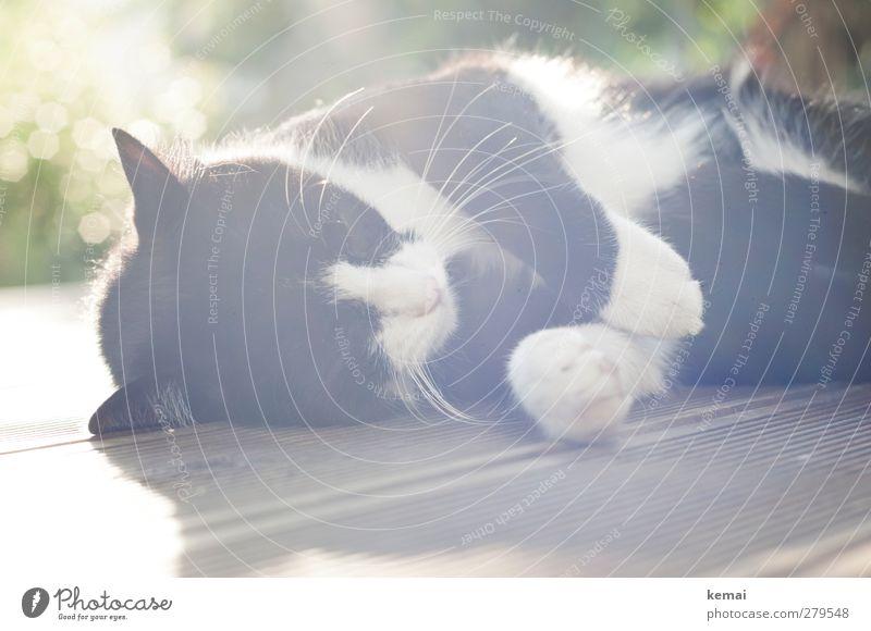 Cat Nature White Animal Calm Black Relaxation Wood Lie Living or residing Sleep Pelt To enjoy Serene Pet Terrace