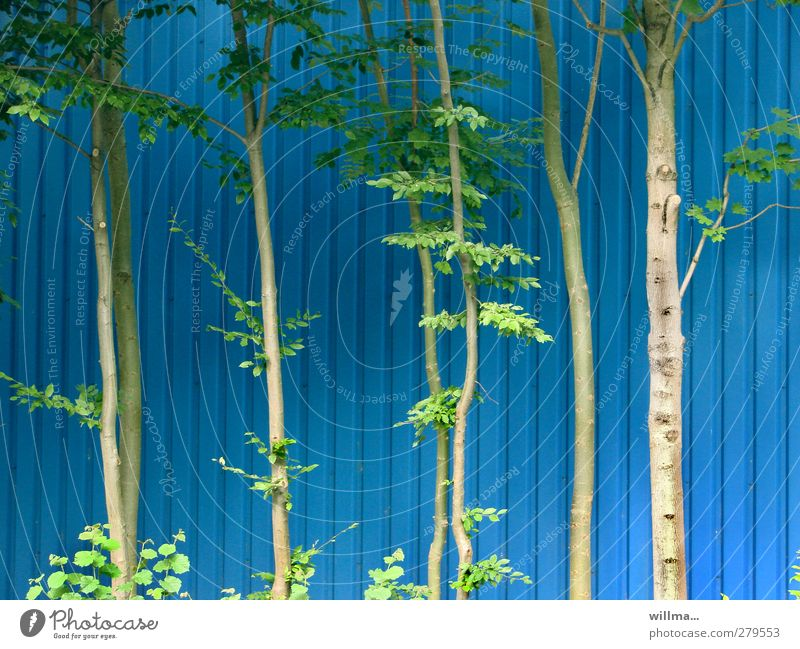 Blue Green Plant Tree Environment Wall (building) Facade Stripe Thin Tree trunk Clump of trees Alder Wall cladding