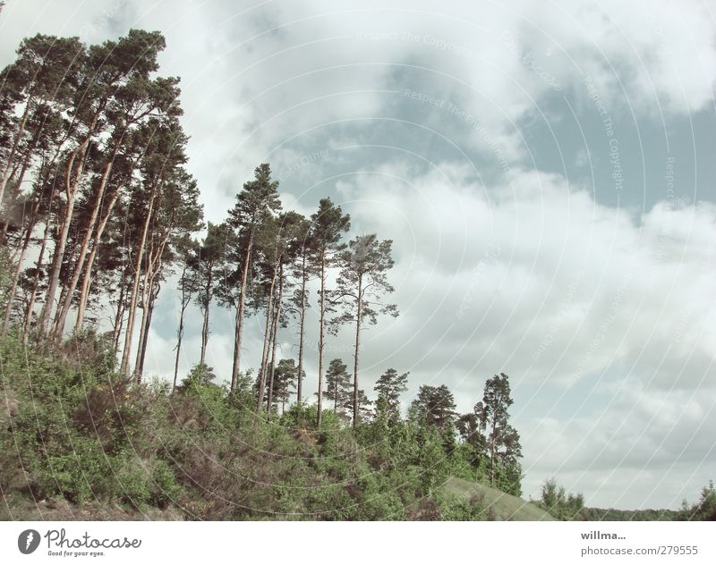 Sky Nature Plant Tree Clouds Forest Landscape Free Bushes Slope Pine Brandenburg Clump of trees