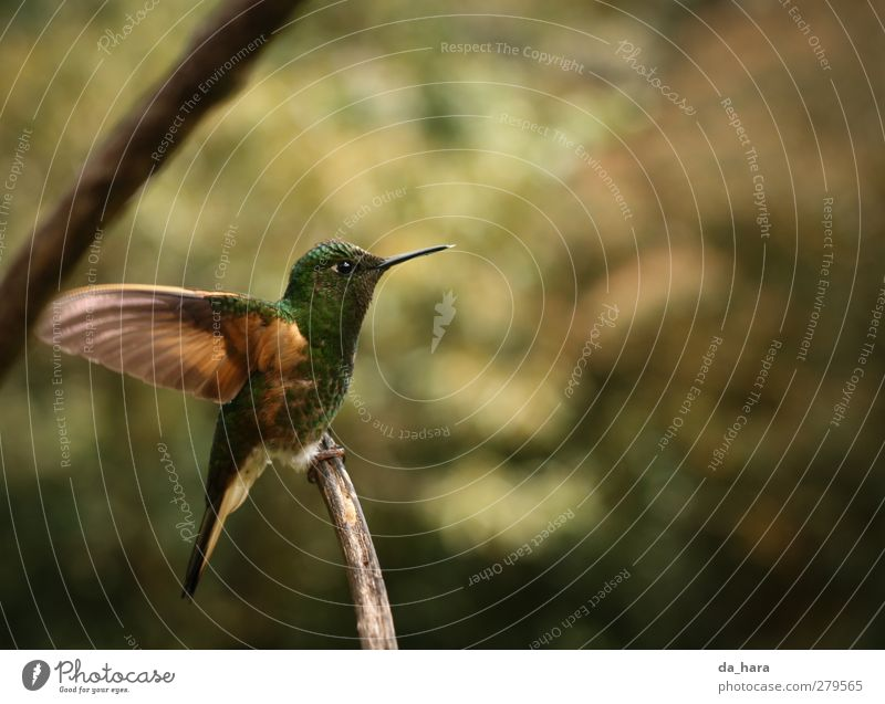Green Beautiful Animal Yellow Small Bird Brown Natural Flying Gold Wild animal Free Cute Curiosity Colombia