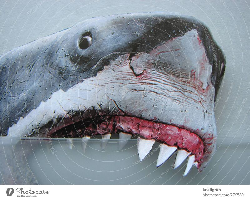 periodontal disease Animal Wild animal Shark white shark 1 Aggression Threat Gray Pink White Emotions Power Fear Fear of death Dangerous Set of teeth Bite