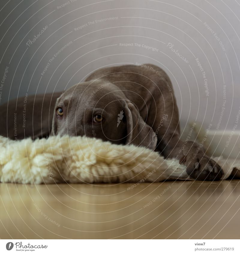 Dog Animal Relaxation Interior design Bright Moody Brown Arrangement Authentic Beginning Decoration Living or residing Sleep Change Pelt Infinity